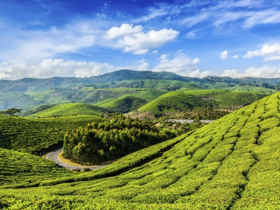 Plantations in Munnar, Kerala, India.
