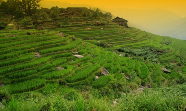 Truly gob smacking scenery: Get out of the main tourist areas, and see Bali's world heritage listed rice terraces, watch ...