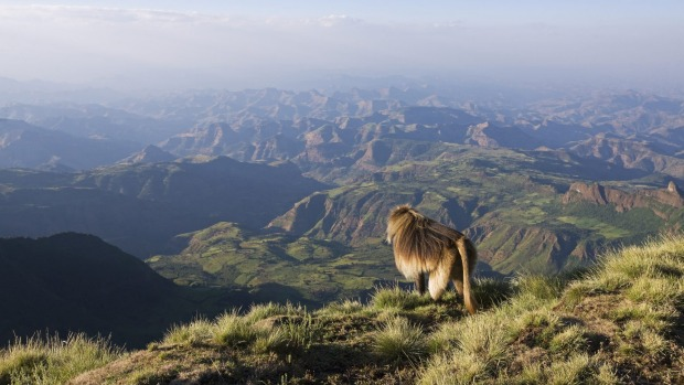 BEST WILDLIFE SPOTTING: SIMIEN MOUNTAINS, ETHIOPIA. There ain't a whole lot of snow in Africa, but one of the places you ...
