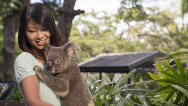 Learn more about marsupials at Wild Life Hamilton Island.