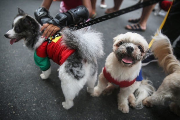 Costumed dogs gather during a 'bloco' street parade honoring pets, specifically dogs, during pre-Carnival festivities in ...