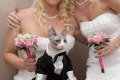 Purrfect pair: Jennifer Hendrix, Erica Nagel and Zeno suitably attired for their Vegas wedding.