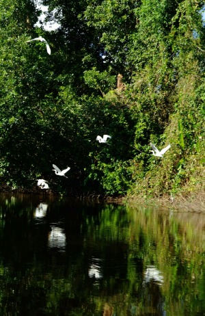 Birds in flight are reflected off the tannin-black waters.