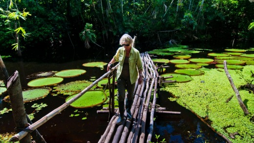 A tourist crosses a bridge over a lake filled with giant Amazon water lilies.