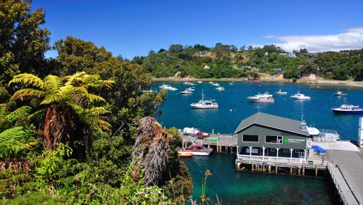 The view of the harbour at Oban, Stewart Island's only village.