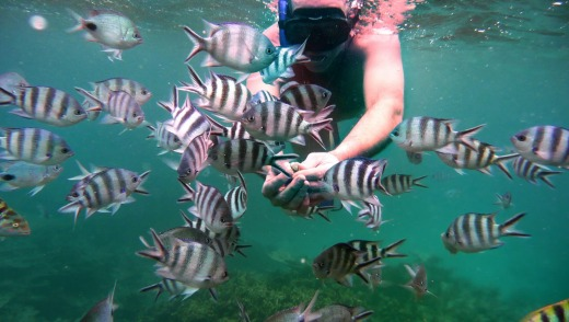 Friendly fish: Snorkelling in  Mauritius.