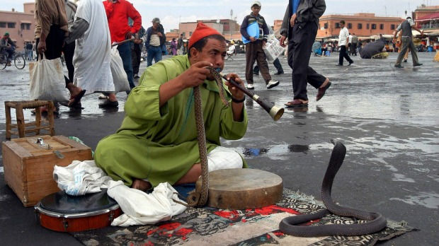 A Moroccan snake charmer plays music to a python in the old section of Marrakech in central Morocco.