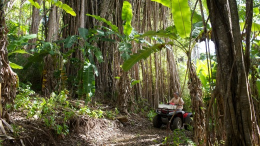 Exploring the interior of Pitcairn Island  on a quad bike.
