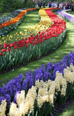 Snaking beds of hyacinths and tulips.