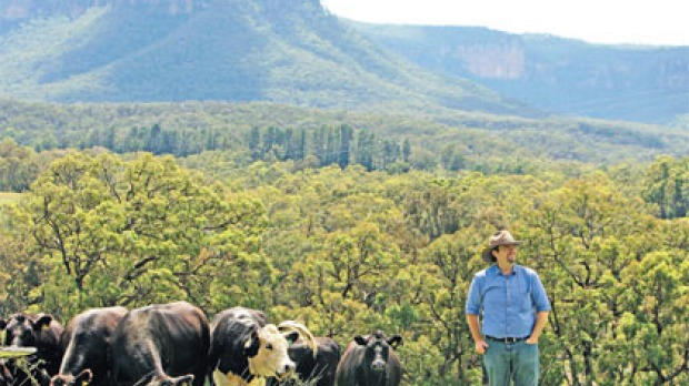 Craig Schuetrumpf and his Angus cattle in Megalong Valley.