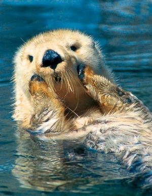 Sea otters can reduce grown men to giggling schoolgirls.