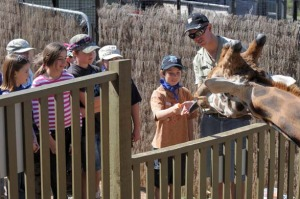 Welcome party ... feeding Hummer the giraffe at the National Zoo.