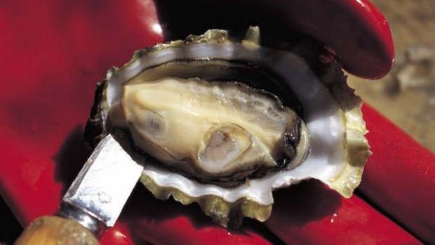 Prized ... Coffin Bay oysters.