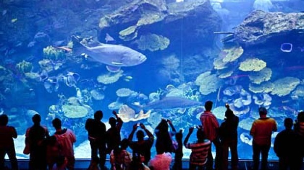 Dubai Mall is the biggest in the world and contains a huge aquarium.