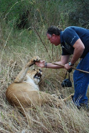 Lion trainer Graeme Bristow plays with the animals as if they were any other household pet.