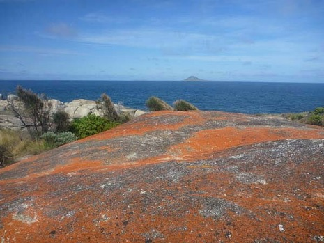 The red crusta on the granite at Flinders Island.