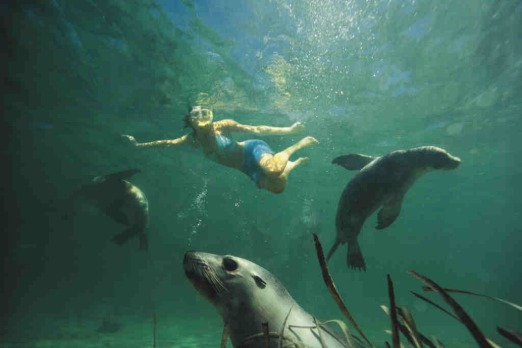 Swimming with sea lions at Baird Bay, South Australia ... it's what you can't see from the beach that makes this place ...