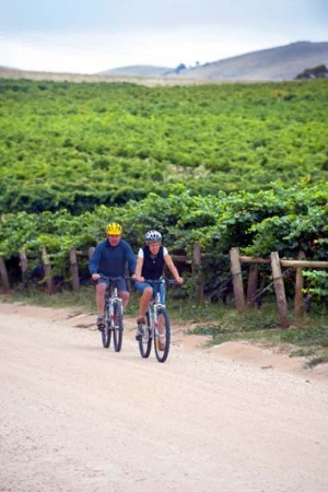 Steeped in history ... riding on the riesling trail in the Clare Valley.