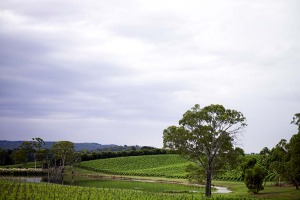 The Adelaide Hills.