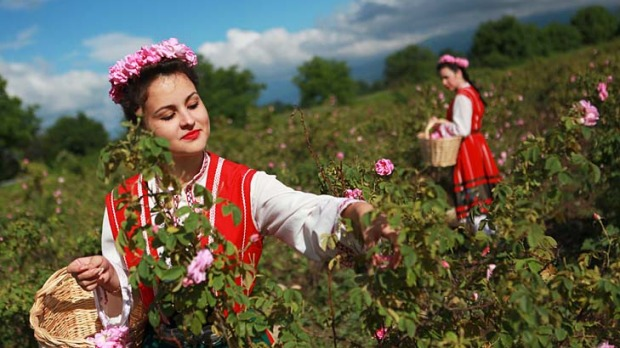 Folk costumes are worn for the rose harvest.