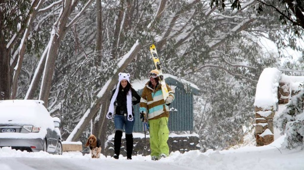 Falls Creek residents Sam Perry and Laura McCoombe with their Cockerspaniel 'Baxter' enjoy a stroll through the snow covered streets of Falls Creek where more than 15cm of snow has fallen and with temps dipping to -4C.