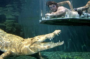 Smile at a crocodile ... (clockwise from main) taking a dip in Crocosaurus Cove;