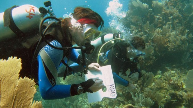 The voluntourism expedition project  takes tourists to the beautiful 26 coral atolls that make up the Republic of ...