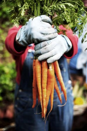 Lammefjiord is home to the 'world's best veggie patch'.