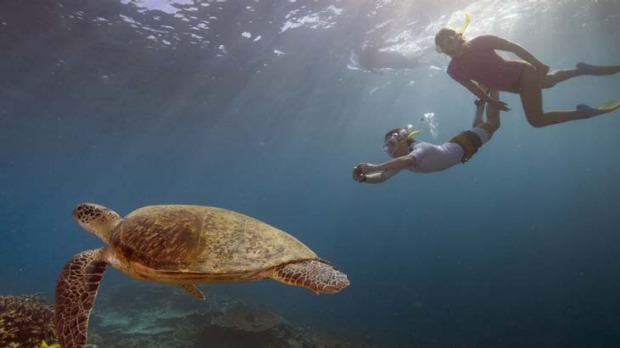 Fantasy delivered ... snorkelling with the sea-life.