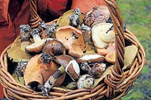 Basket to plate ... wild fungi plucked from the forest.