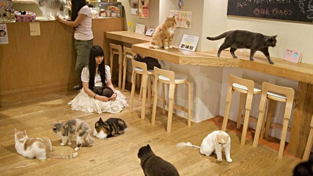 Cat Cafe Osaka Japan Hello Kitty