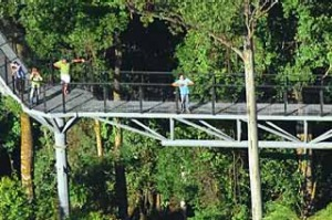 High on the Tamborine Forest Skywalk.