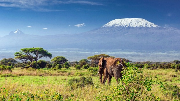 Elephant in front of Mt Kilimanjaro, Tanzania.