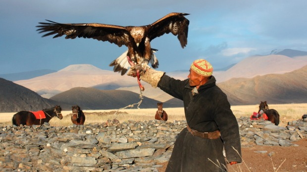 A senior Mongolian man in traditional clothing with a golden eagle, Mongolia.