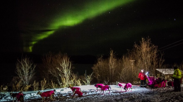 DeeDee Jonrowe arrives at the Ruby, Alaska checkpoint under the Northern Lights during the Iditarod Trail Sled Dog Race ...
