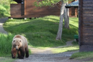 Don't run: Residents at Brooks Lodge are given a briefing in what to do if they encounter a bear.