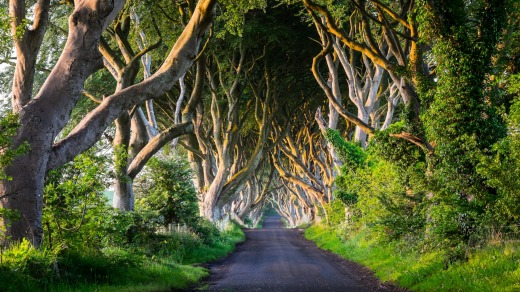 The Dark Hedges, Ballymoney: Where Arya Stark first appears dressed as a boy on King's Road.