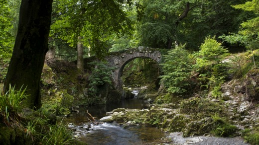 Tollymore Forest Park, County Down:  Where the night watchmen first see the white walkers.