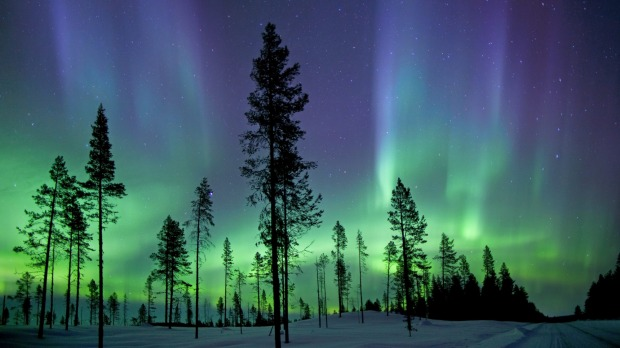 Trees stand out starkly against a breathtaking early morning view of the aurora borealis.