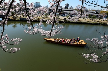 Tourists take a traditional boat ride as they enjoy cherry blossoms in full bloom at Himeji Castle Lake in Himeji, ...