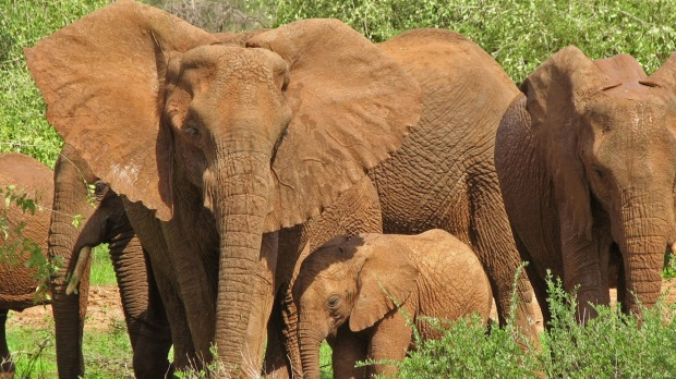 Travel deals: Save on Collette's Plains of Africa 13-day