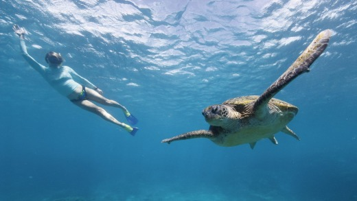 Snorkelling with a turtle.