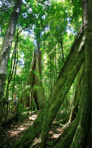 Exploring Mary Cairncross Reserve, part of the extensive 58km Sunshine Coast Hinterland Great Walk.