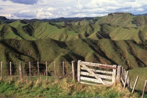 The creased hills of New Zealand's Forgotten World.