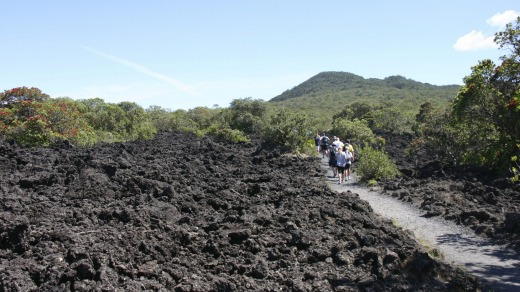 The path to Rangitoto Island's summit leads through volcanic rock that looks likes newly ploughed dirt.