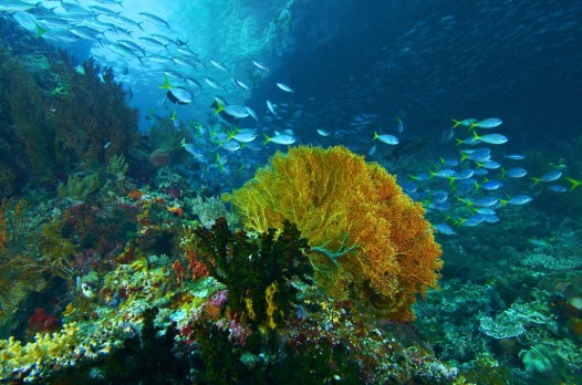 "A 2002 report by US-based Conservation International (CI) classed the waters as ""potentially the world?s richest in ..."