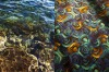 """The inspiration?"" ... an underwater scene at Clovelly is paired with a multi-coloured carpet in this diptych."