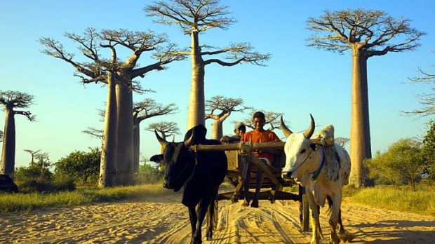 vacations madagascar travel guide travelling with kids