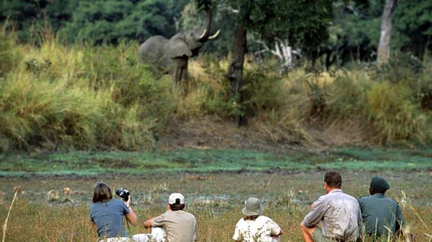 On safari ... company during a guided walk in South Luangwa National Park.