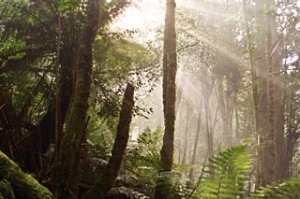 North by north-west ... sunlight filters to the forest floor in the Tarkine.